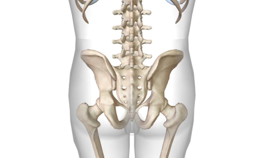 כאבים באגן / גב תחתון – מפרק סקרואיליאק