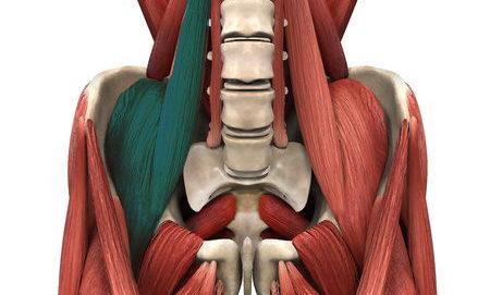 הסבר על שריר מותן כסל – השריר שגורם להרבה בעיות גב תחתון